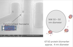 Functionalized Nanowires Vista NanoBioSciences