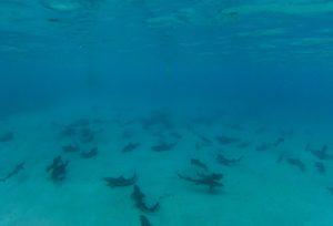 World Oceans Day -- Sharks
