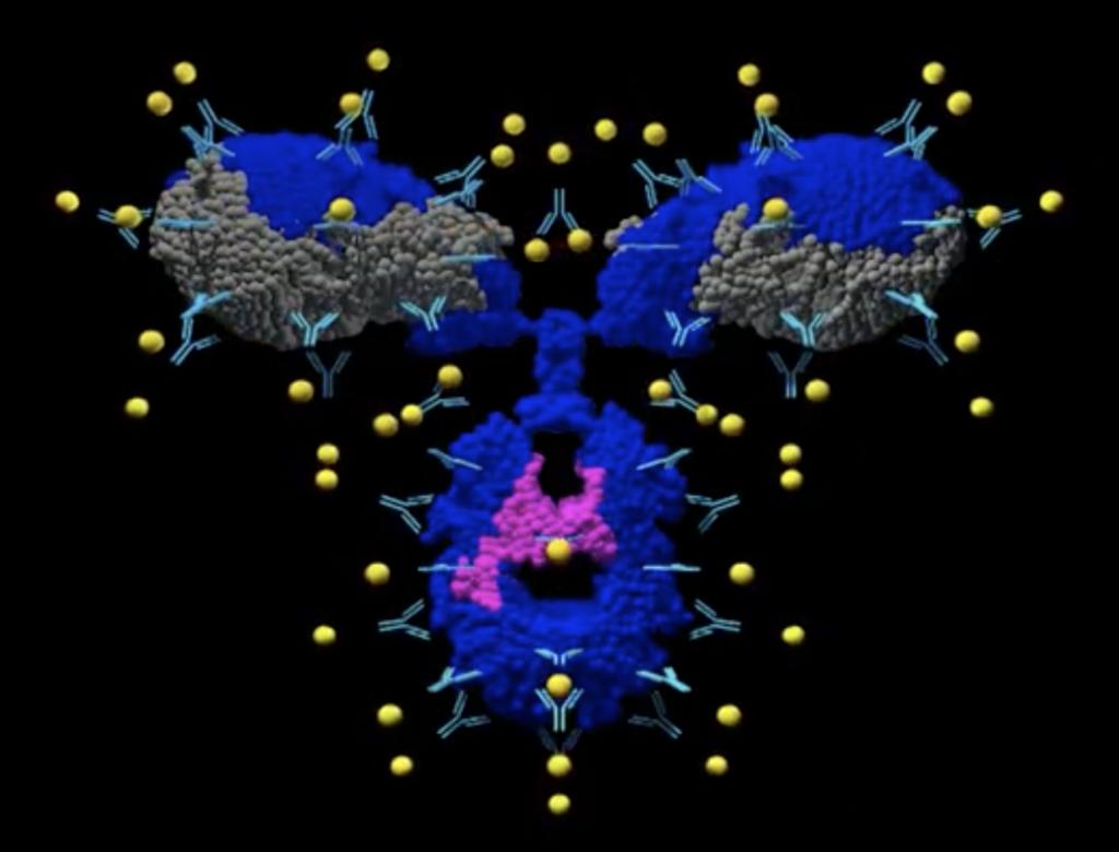 ArrayBridge Protein Conformational Array